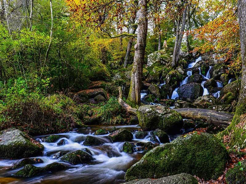 Becky Falls Woodland Park